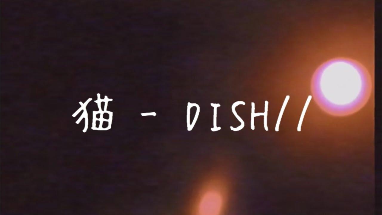 猫 - DISH// (弾き語りcover)