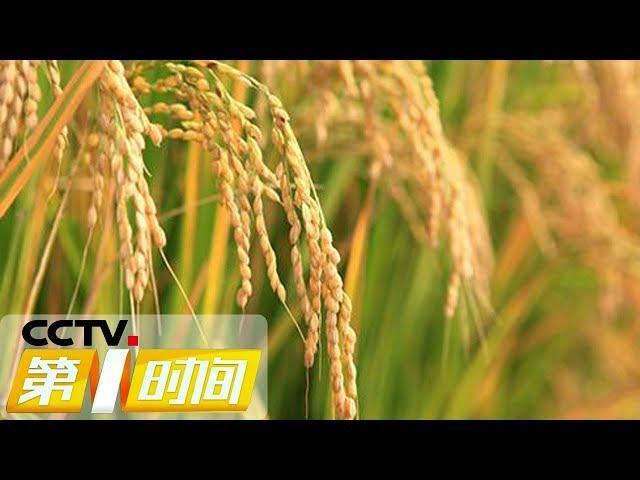 《第一时间》国家粮食和物资储备局:2018年收购粮食7200多亿斤 20190118 1/2 | CCTV财经