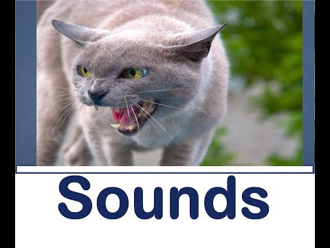 Cat Hissing Sound Effects All Sounds