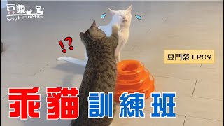 [Soya vs Rong Ep09] How to Teach a naughty cat