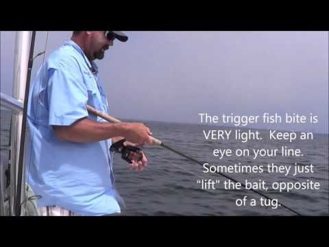 How To Catch Trigger Fish