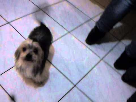 cane che balla il Tacatà