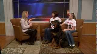 Multi-dog Household Tips, Dog Face Interview On Nbc 15 News Nov 18, 2014