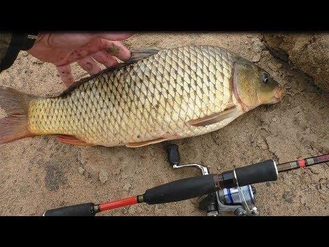 Рыбалка на реке Амур, Сом,Сазан