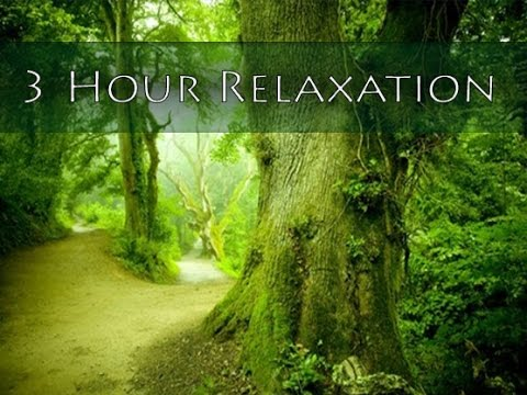 3 Hour Relaxing Music: New Age Music: Music for Relaxation; Meditation Music; Yoga Music mix 🌅506