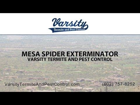 Mesa Spider Exterminators | Varsity Termite & Pest Control