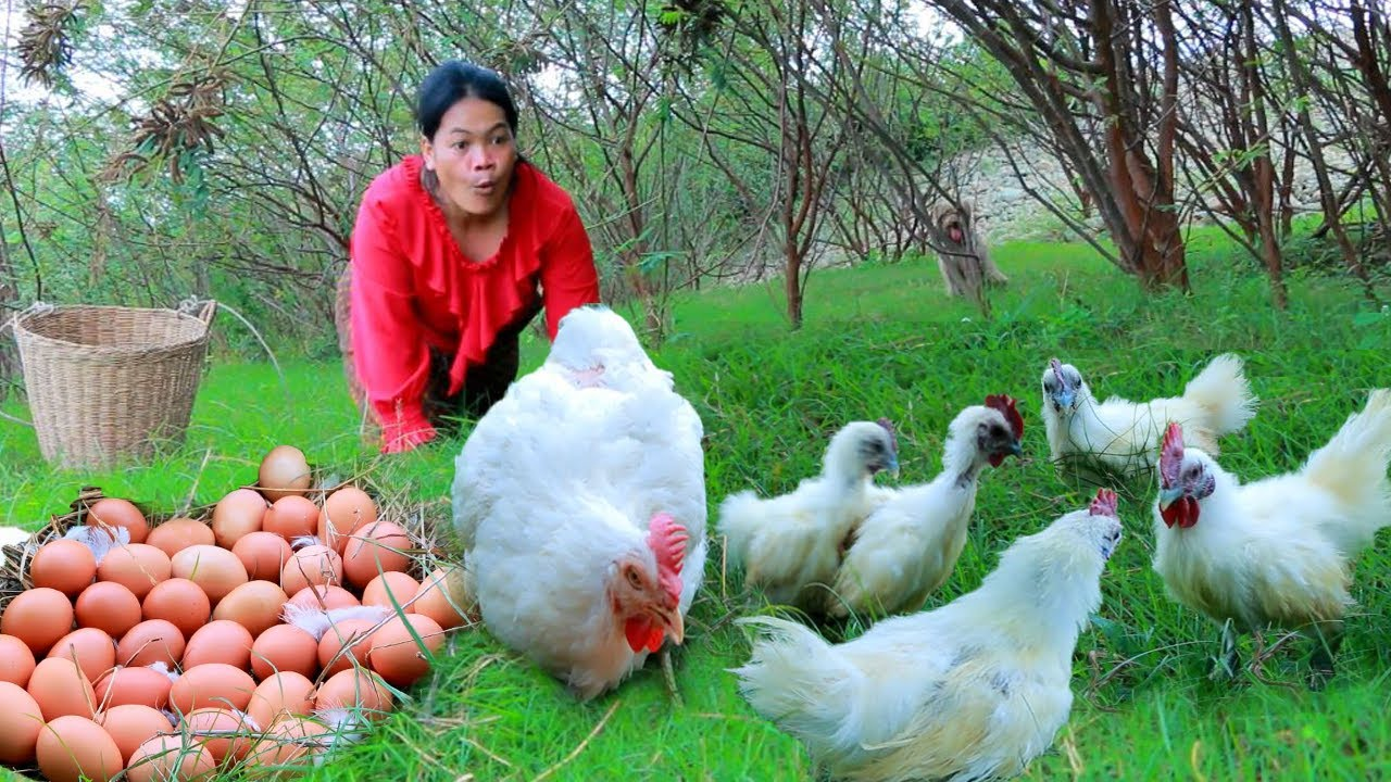 women finding food meet egg, baby chicken and chicken- soup chicken for dog- Cooking in forest HD
