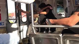 Los Angeles MTA Expo Line Girl Brawl