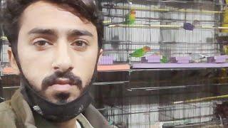 Live Taj Birds - Galaxy Birds Shop DHA Karachi