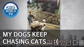 My dogs keep chasing cats… :( [Dogs are incredible/ENG/2020.01.28]