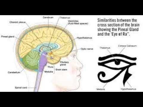 Christ consciousness, 33, Chrism, pineal gland and the Kundalini awakening, occult science