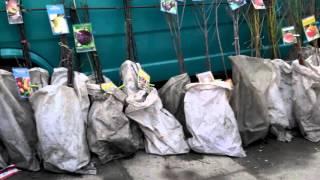 видео Купить саженцы в Чернигове (с доставкой)