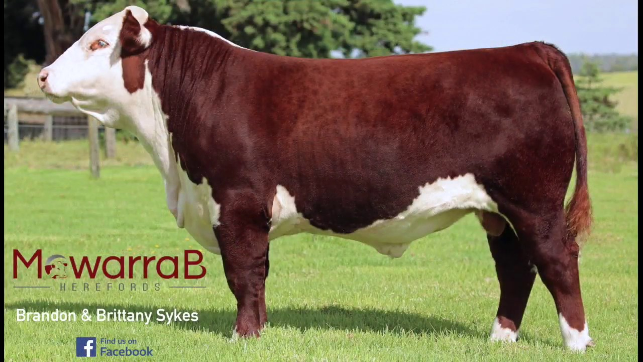 Lot 100 Mawarra B Above and Beyond (P)