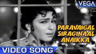 Paravaigal Siraginaal Anaikka Video Song   Ninaivil Nindraval Movie Song