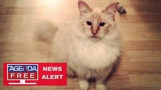Serial Cat Killer in Washington State - LIVE COVERAGE