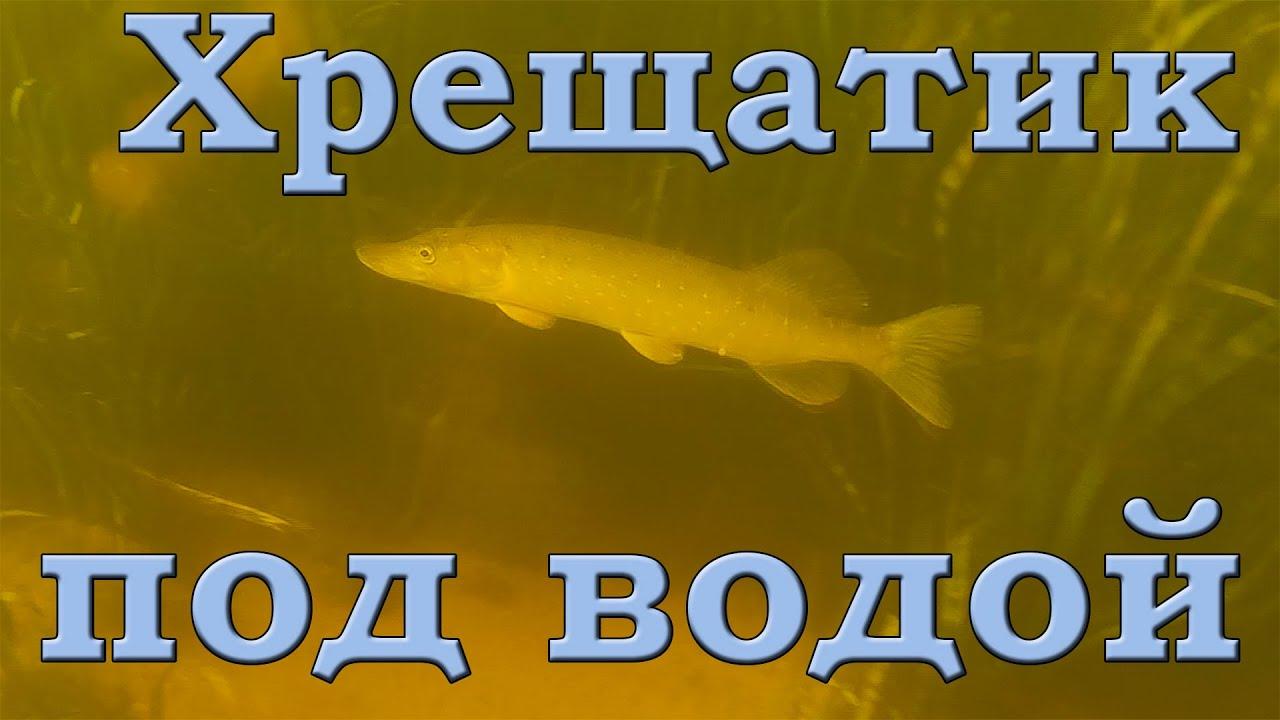Хрещатик под водой. Дельта Роси. Подводная съемка. Щука, окунь, плотва, густера...