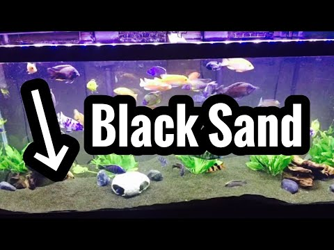 Best Black Sand Aquarium Slideshow Gallery
