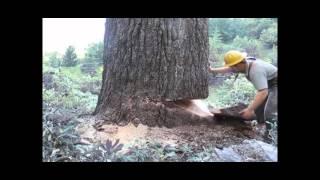 ИНТЕРЕСНОЕ&ПОЗНАВАТЕЛЬНОЕ  Как лесоруб пилит дерево(ИНТЕРЕСНОЕ&ПОЗНАВАТЕЛЬНОЕ Как лесоруб пилит дерево., 2013-11-30T15:41:30.000Z)