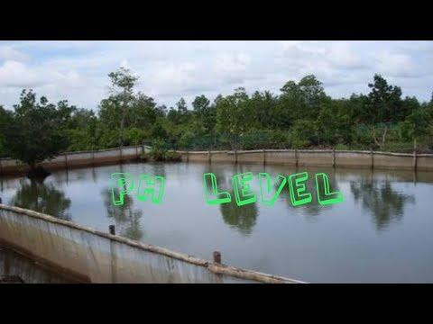 Fish Water PH Level