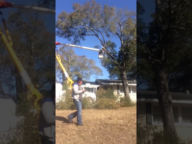 Pensacola Tree Trimming