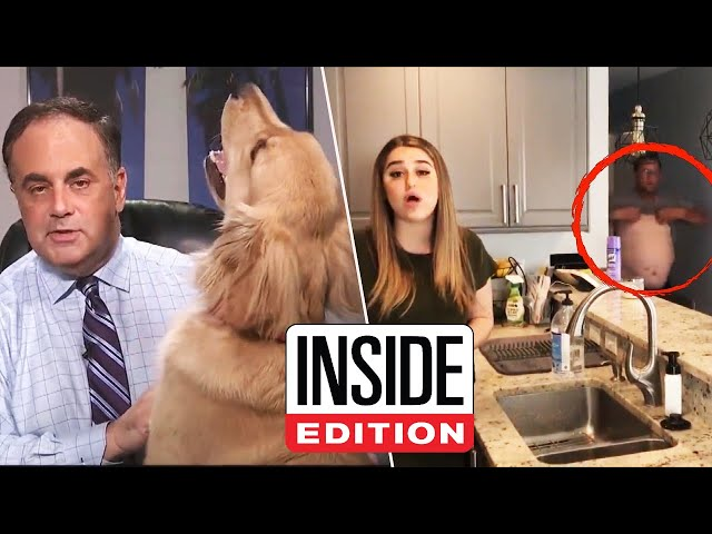 Our Favorite News Reporters Working From Home Bloopers