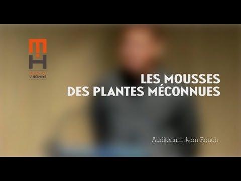 Les mousses des plantes méconnues