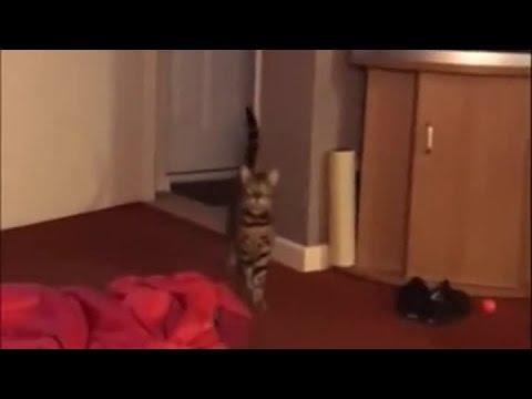 Boom, boom, boom... Let Me Hear You Say Wayo!!! Wayoooo! :)
