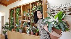 Plant Tour   My 200+ Houseplant Collection