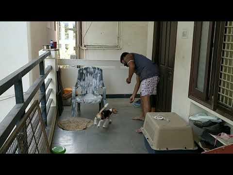 Puppy basic dog training by my style. Under training