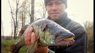 Рыбалка на реке Псел.Судак на 2 кг. Окуни и щуки