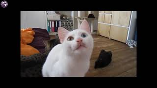 Funny Cat Videos - by Pet Friend