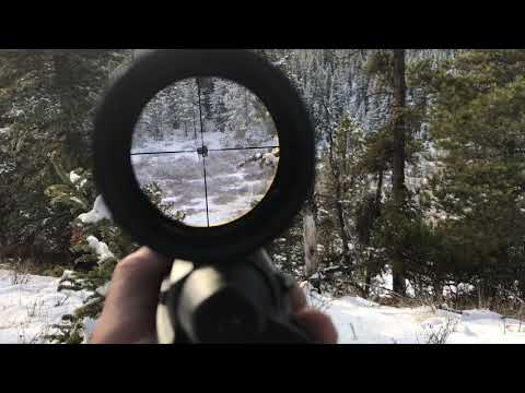 Running Into A Moose While Deer Hunting In Alberta, Canada. Rifle Scope POV.