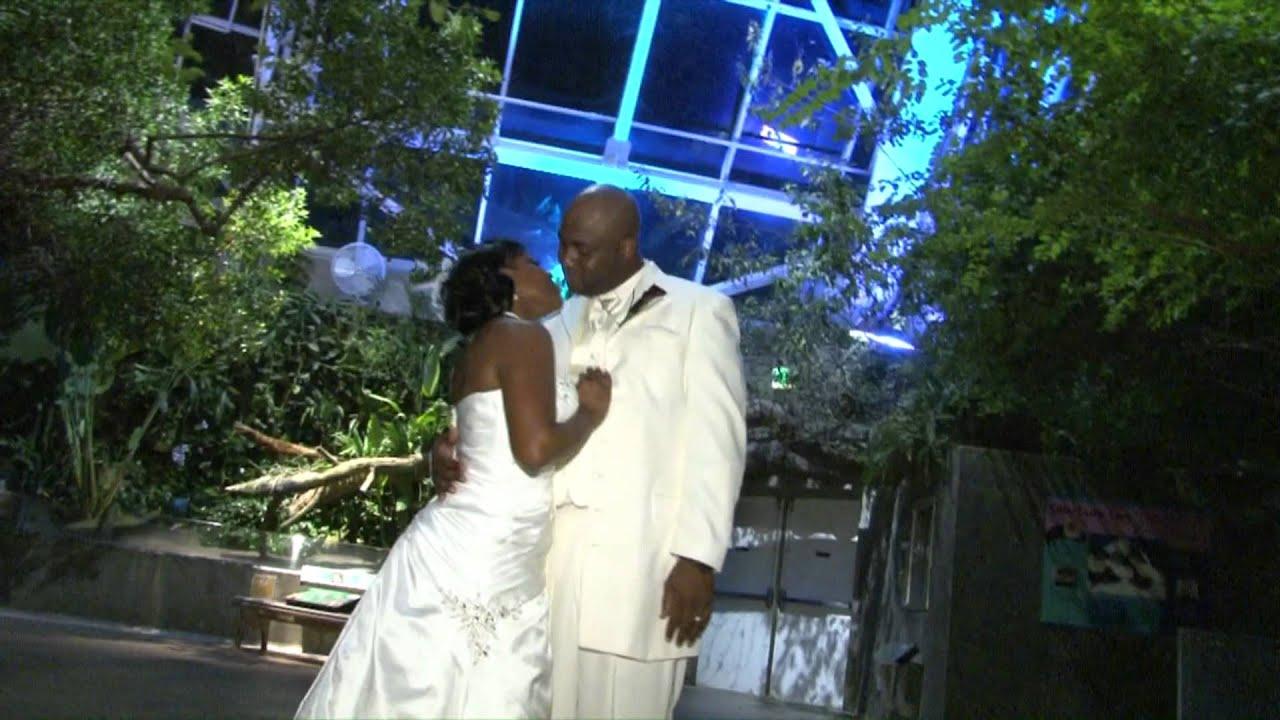 Florida Aquarium Tampa Wedding Videographer Youtube