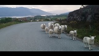 Carew's Adventures in Scotland--Driving on the Wrong Side of the Road with Nordic Visitor!