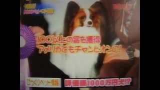 2002年放送 今夜決定 かわいいペットベスト100 スーパーパピヨン エミー...