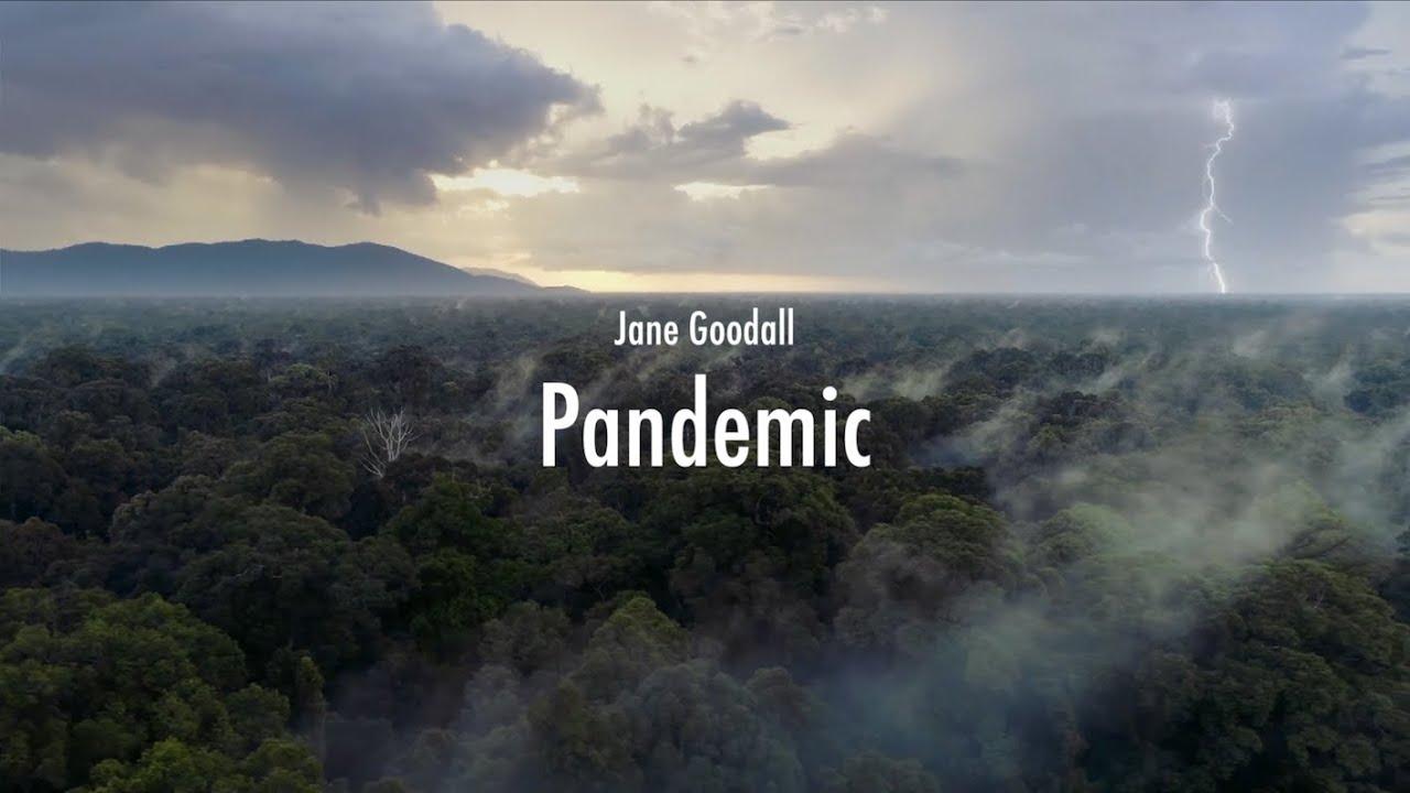 Jane Goodall - Pandemic