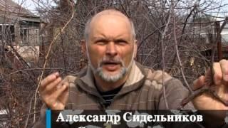 видео Коккомикоз