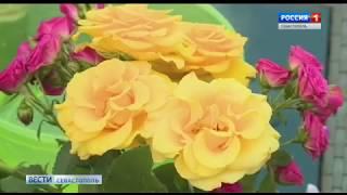 Вести Севастополь 15.06.18 (17:40)