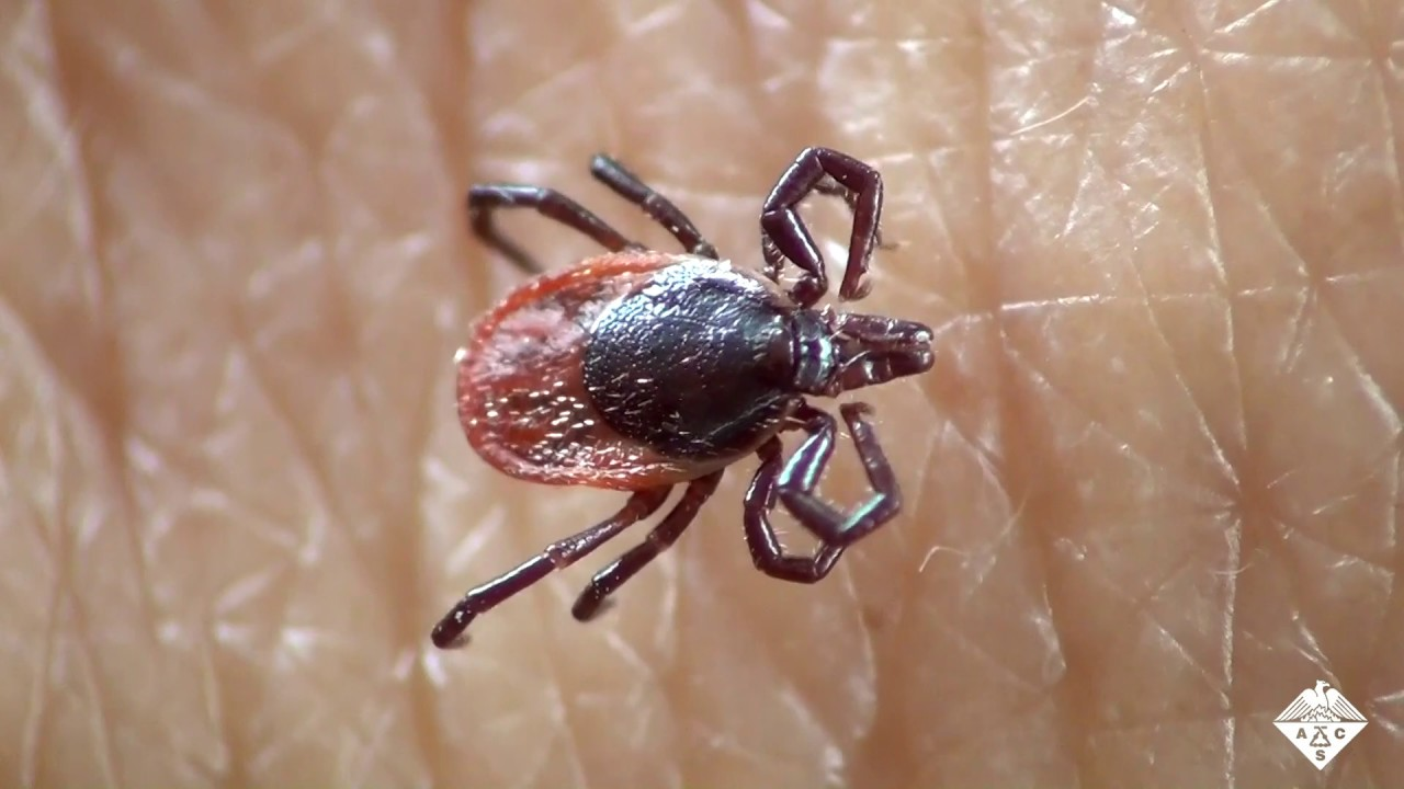 A New Approach to Tick Control | Cell And Molecular Biology