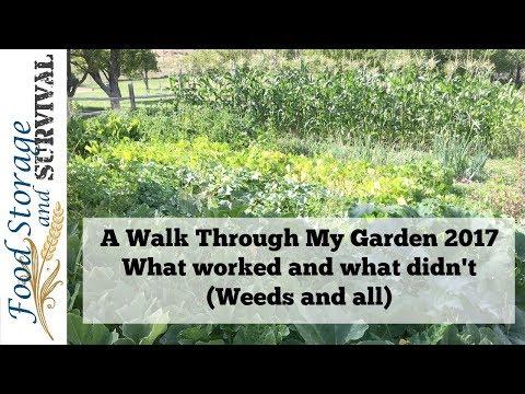A Real Walk Through My Real Garden