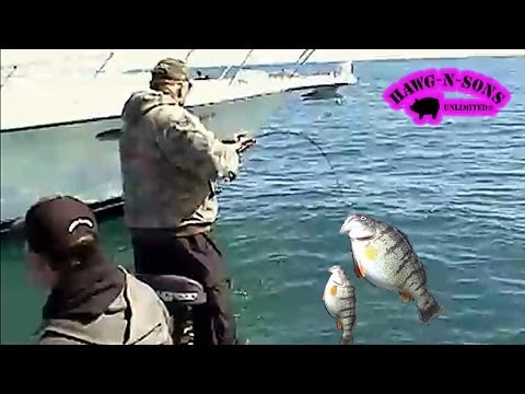 Lake Michigan Catching Doubles Jumbo Perch Fishing Madness