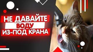 Почему кошкам нельзя пить из-под крана? Какую воду давать кошке