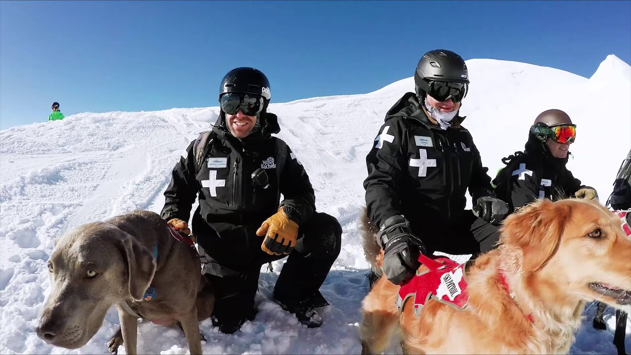 Mt Bachelor Rescue Dogs