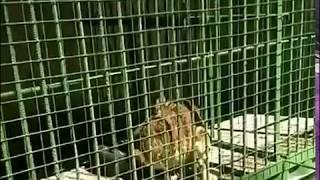 Ошане жалуются на издевательства над животными в зоопарке