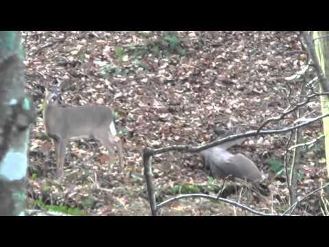Allegheny County Muzzleoader Deer Hunt
