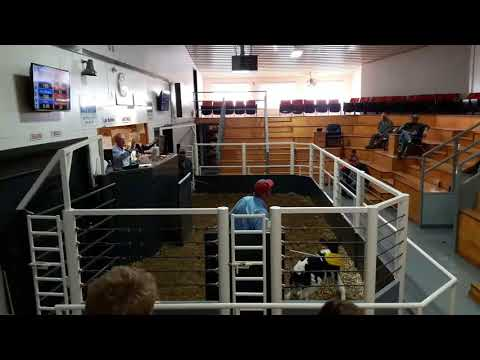 10-12-17 Sale at Central Livestock in Albany