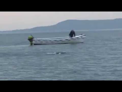 Sea monster in Ireland 2013