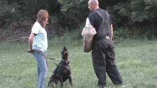 "Sport Protection Training..doberman Pinscher ""menos"" July 16th 2010"