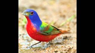 красивые птички #beautiful birds