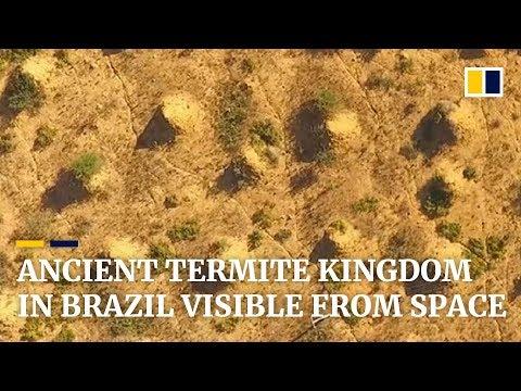 Ancient termite kingdom the size of Britain found in Brazil